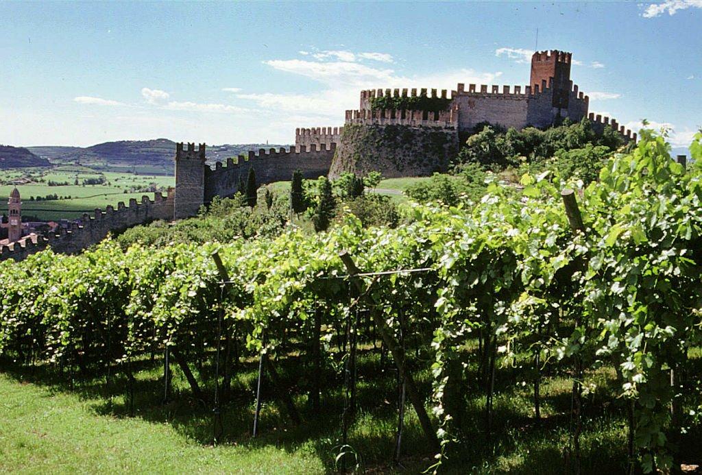 valpolicella vigneto viticoltura