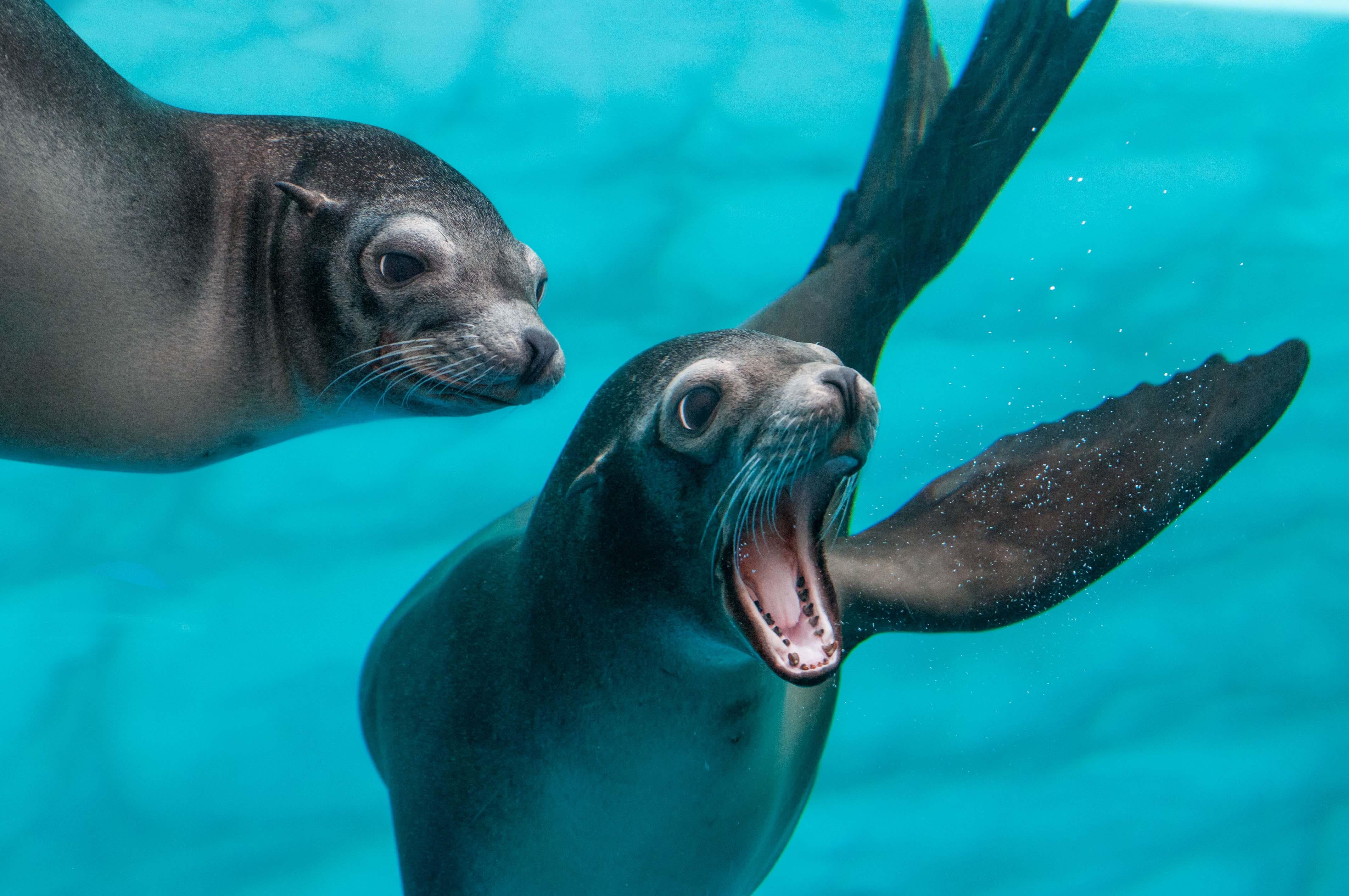 Gardaland_SEA_LIFE_Aquarium_Leoni Marini_140_ok