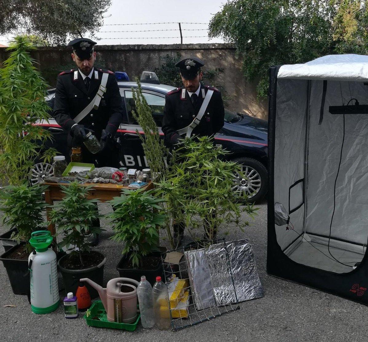 cannabis-cerea