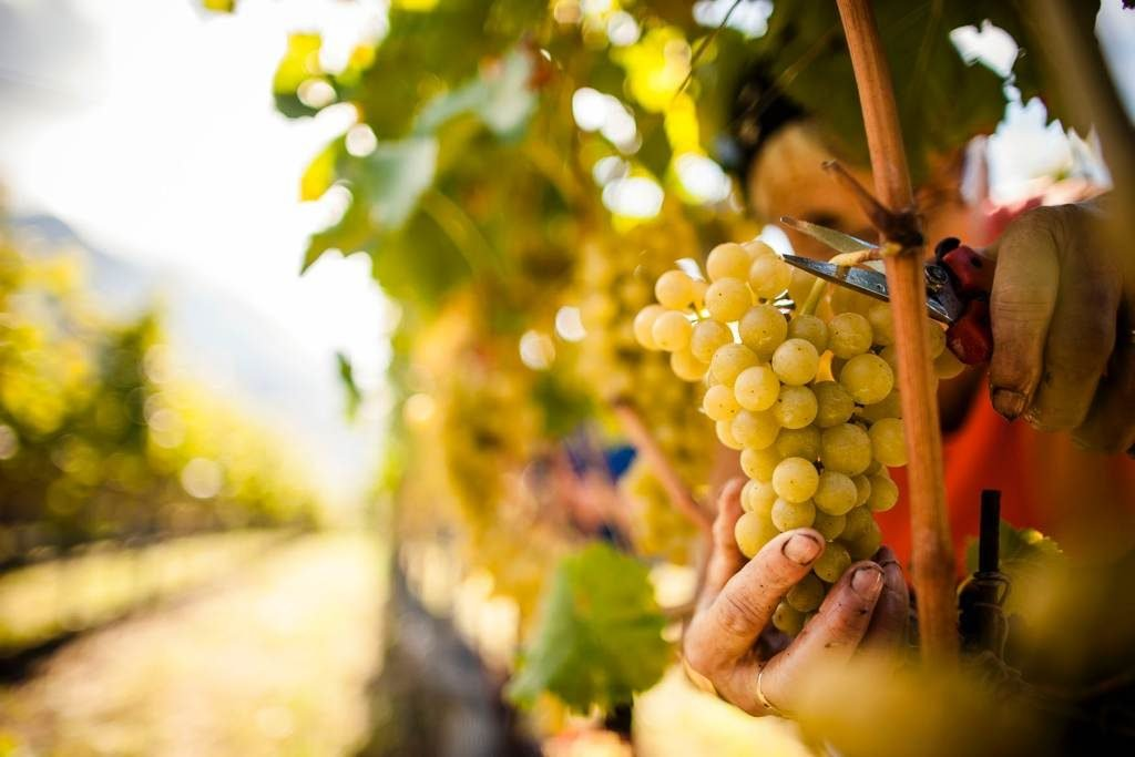 vendemmia made in italy export