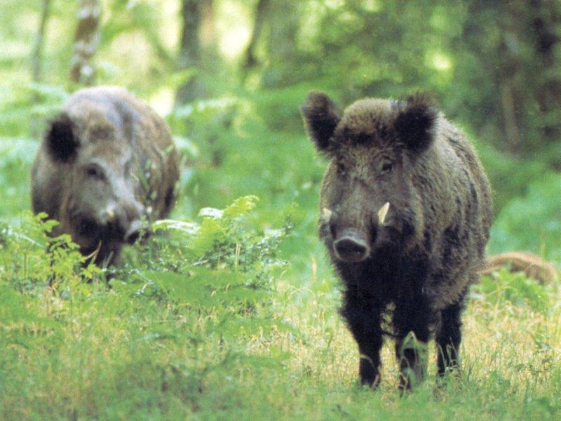 animali selvatici