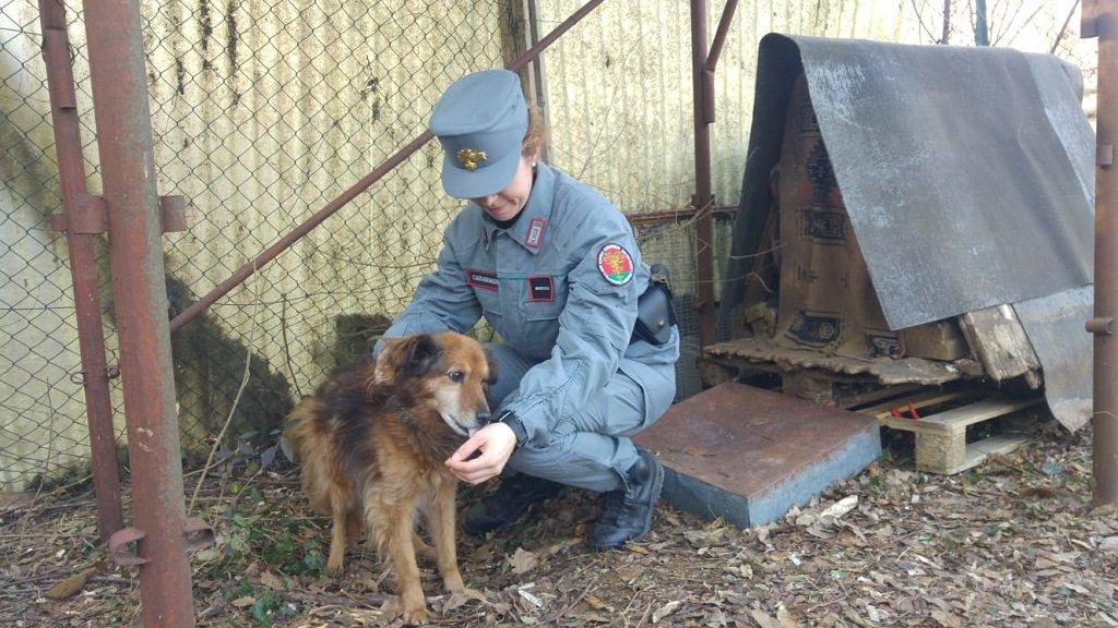 Sequestro cane Carabinieri Forestali a Coda di Alcenago