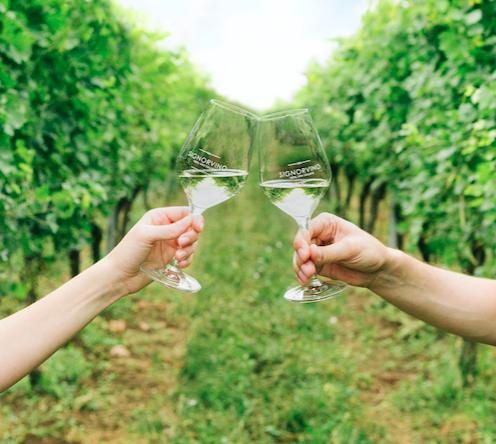 vino vigna