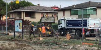 abbattimento alberi stadio