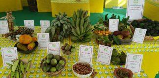 frutti esotici italia