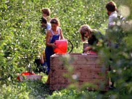 giovani agricoltura coldiretti