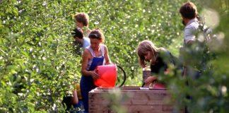 giovani agricoltura coldiretti lavoratori stagionali verona braccianti finanziamenti giovani agricoltura Verona