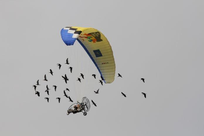 ibis eremita migrazione guidata