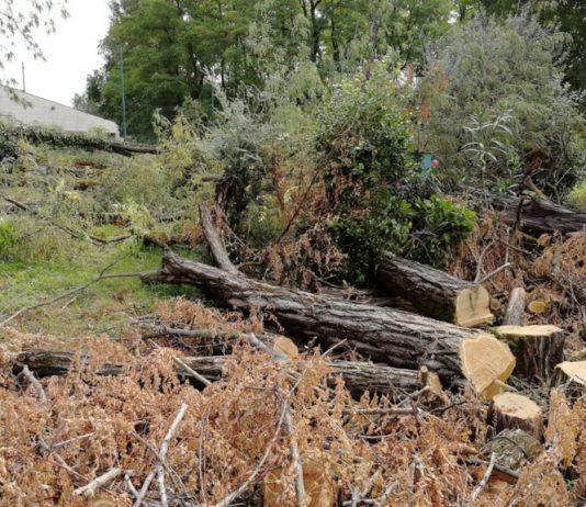 alberi taglio pd