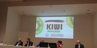 kiwi camera commercio