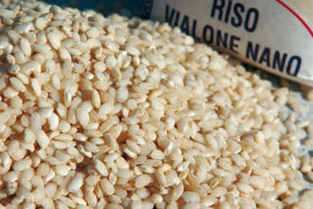 riso - vialone nano - confartigianato veneto