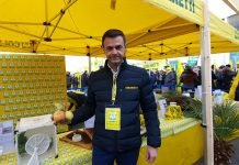 Ettore Prandini presidente coldiretti a Fieragricola - Danni cimice asiatica