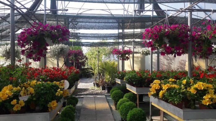 IMAGO ECONOMICA 202 - fiori in Veneto vivai vivaio garden vendita di piante