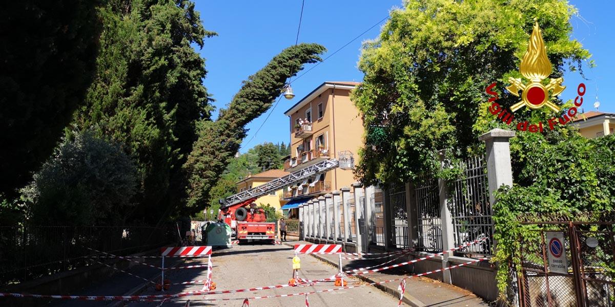 maltempo alberi danneggiati vigili del fuoco