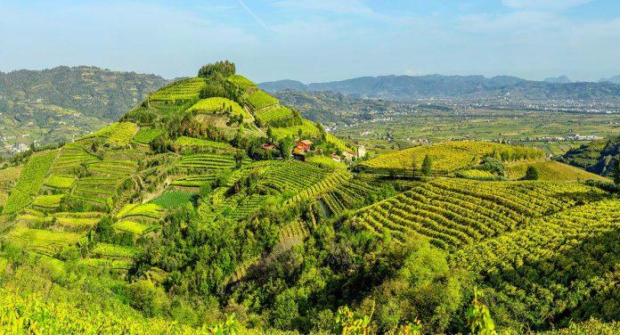 soave paesaggio colline vitate del soave