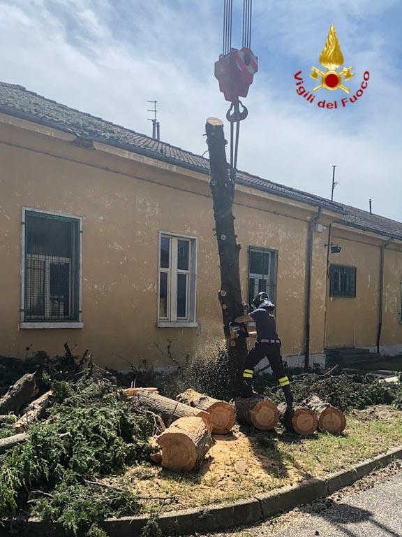 Alberi abbattuti caserma G. Duca - Vigili del fuoco