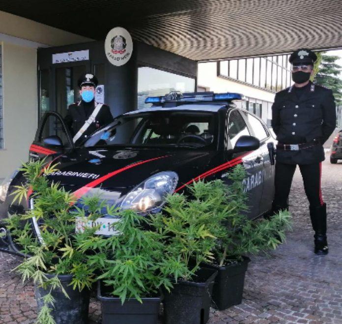 Porto di Legnago cannabis carabinieri