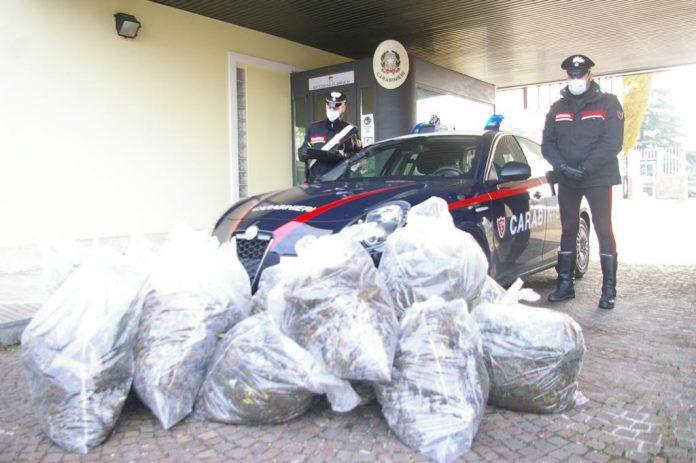 Carabinieri Legnago marijuana