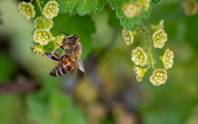 ape primavera fiori polline allergia api