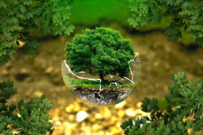 pixabay ambiente natura riciclo