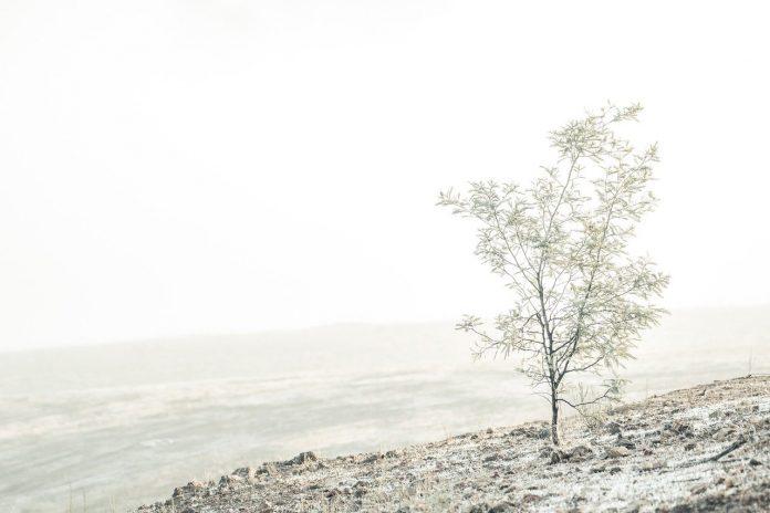 pixabay gelo maltempo freddo gelate neve ghiaccio nebbia