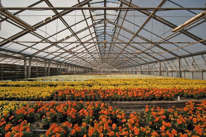 serra comparto florovivaismo vivaio vivai fiori florovivaismo giardinaggio serre
