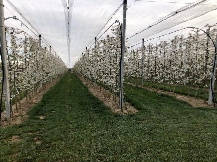 Gelate colture veronesi impianto antibrina
