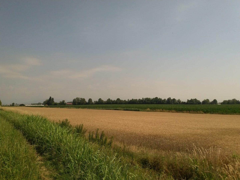 Campi agricoli sul tracciato Buttapietra risorgive
