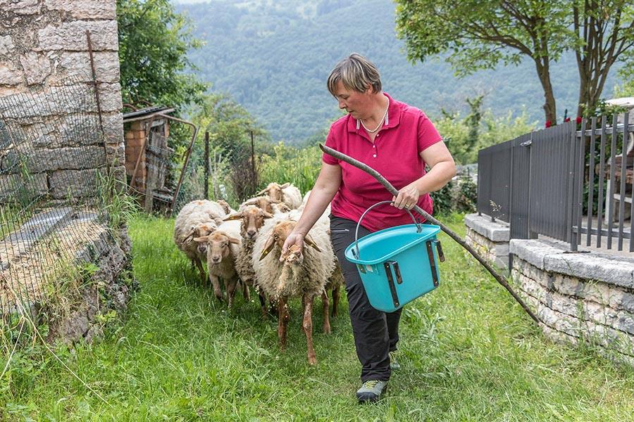 Cristina Ferrarini con le sue pecore