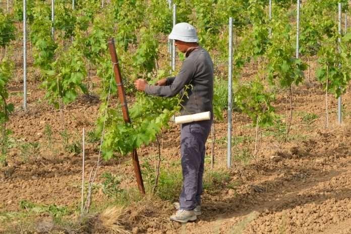 Lavoratore agricolo stagionale