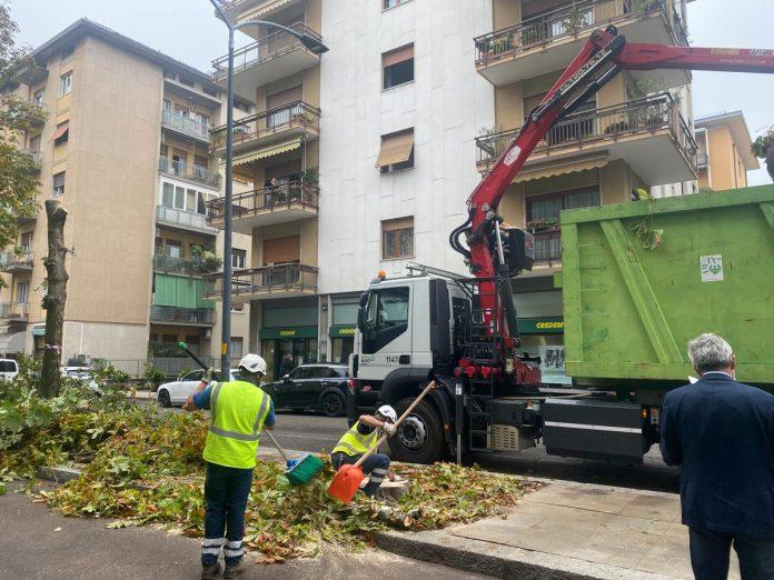 Amia taglio alberi via Todeschini Verona