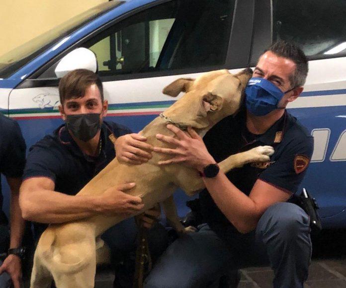 Volanti - Arresto resistenza e salvataggio pitbull