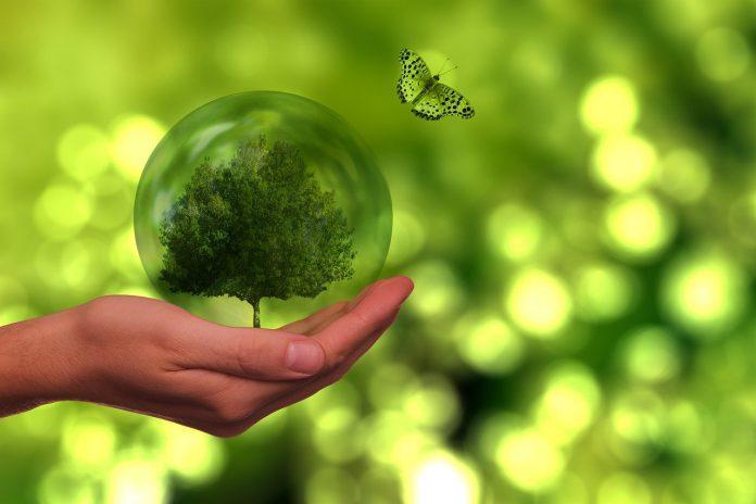 albero sostenibilità ambiente ecologia
