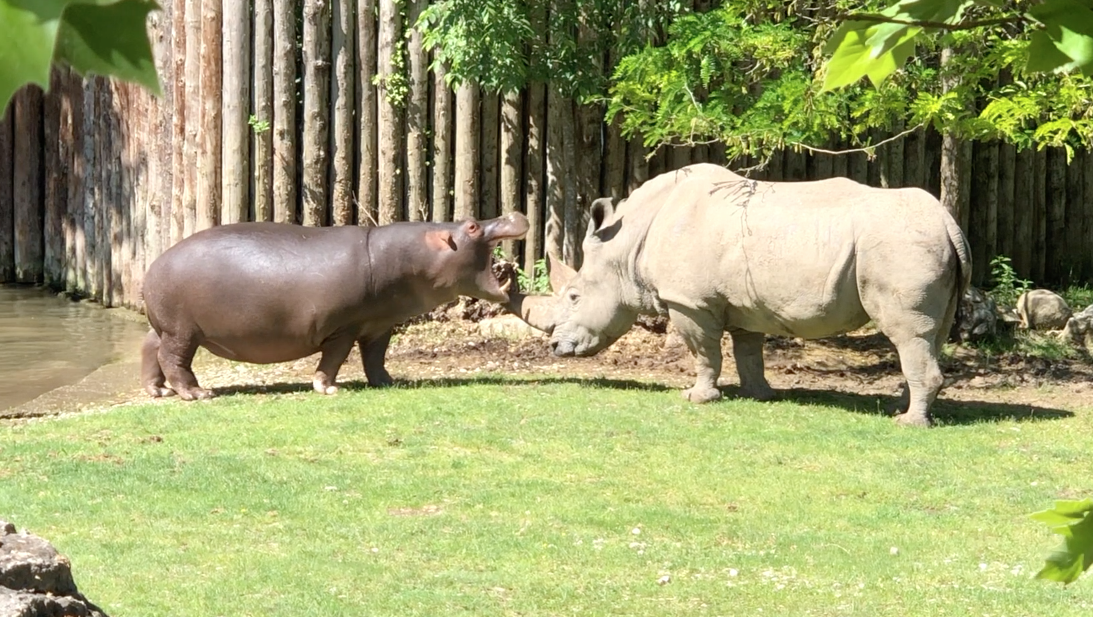 rinoceronte Toby Parco Natura Viva Verona